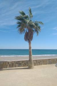 palm tree on beach